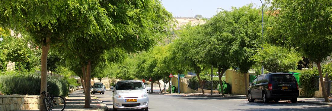Ramat Beit Shemesh - Ramat Shilo